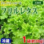 兵庫県産 フリルレタス 秀品 約30g(袋入り)