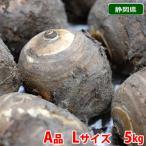 静岡県産 海老芋 秀 約5kg(10〜15本入)