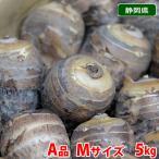 静岡県産 海老芋 A等級・L〜2Lサイズ 約5kg(10〜18個入)