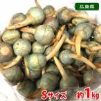 広島県産 くわい(クワイ・慈姑) 秀品 Sサイズ 1kg