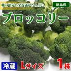 徳島県産 ブロッコリー 秀品 Lサイズ 1株