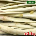 【送料無料】愛知県産 軟白うど 秀品 約3.5kg(7〜11本入り)