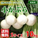 【送料無料】徳島県産 小かぶら 10kg Sサイズ