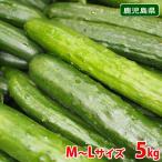 鹿児島県産 白いぼきゅうり 5kg