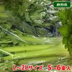 【送料無料】静岡県産 セルリー(セロリ)L〜2Lサイズ 5〜6束入り箱