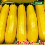 岡山県産 黄色ズッキーニ Lサイズ 2kg