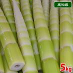 高知県産 秋の筍 四方竹(しほうちく)5kg