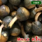 大阪府産 くわい(クワイ・慈姑) 秀品 Mサイズ 1kg