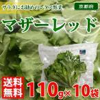 【送料無料】京都府産 マザーレッド 110g×10袋入り 1箱