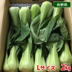 【送料無料】長野県産 青梗菜(チンゲンサイ) Lサイズ 約2kg 1箱(16〜20株入)