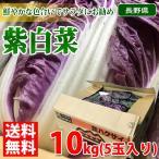 【送料無料】長野県産 紫白菜 Lサイズ 5玉入り(1箱)