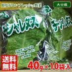 送料無料 大分県産 チシャレタス 約40g×10袋入り(箱)