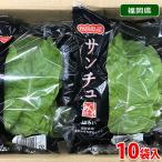 送料無料 福岡県産 サンチュ 約30g×10袋入り(箱)