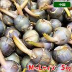 中国産 くわい M〜Lサイズ 5kg(箱)