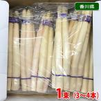 香川県産 ホワイトアスパラガス Lサイズ 大 3〜4本/束