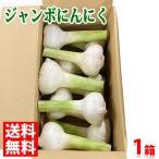 送料無料 徳島県産 ジャンボにんにく 10〜12玉入り 6kg
