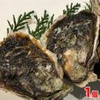 島根県産 岩がき(生食用)300〜350g/個