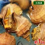 北海道産 (活)真ツブ貝 約1kg(5〜6個)