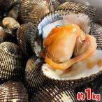 (活)赤貝 約1kg(7〜8個入)