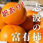 訳あり!福岡県産志波柿 冷蔵柿 M〜2L混合 約11個 【富有柿】【ご家庭用】