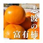 【ブランド柿】福岡県産志波柿 富有柿 Mサイズ 約12玉