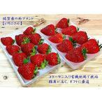 【送料無料】佐賀県白石町の新ブランド苺「いちごさん」 2パック イチゴ 赤いちご 苺  かわさきいちご
