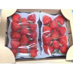 【送料無料】佐賀県白石町いちご「恋みのり」 2パック イチゴ 赤いちご 苺  鐘ヶ江ファーム