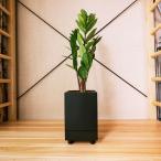 ザミオクルカス | 観葉植物と鉢「STILL」のセット |「Turk」