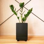 ザミオクルカス | 観葉植物と植木鉢「STILL」のセット |「Virgil」
