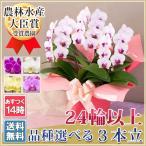 ギフト あすつく開院祝い 花 鉢花 洋蘭 供花 長寿 還暦 ミディ
