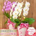 母の日 ランキング1位! 花 鉢植え 胡蝶蘭 品種選べる2本立 ギフト プレゼント