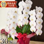 ギフト あすつく開院祝い 花 鉢花 洋蘭 供花 長寿 還暦