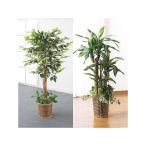 観葉植物 インテリアグリーン 2点セット 人工観葉植物 造花 光触媒 水やり不要 ベンジャミン 幸福の木 代引不可