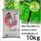 米 日本米 特Aランク 産地直送 25年度産 新潟県 魚沼産 こしひかり 10kg (5kg×2袋) JA直送 ポイント10倍