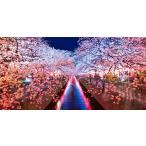 絵画風 壁紙ポスター (はがせるシール式) -地球の撮り方- 輝く川面、東京都目黒川の夜桜ライトアップ さくら 桜 パノラマ C-ZJP-008S1 (1152mm×576mm)