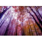 絵画風 壁紙ポスター 紅葉 樹木 森林 霧 赤黄色 ピンク 癒し 色彩 (はがせるシール式) キャラクロ KYO-010A2 (A2版 594mm×420mm) 建築用壁紙+耐候性塗料