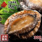 ( あわび 鮑 アワビ ) 北海道産 活アワビ S-Mサイズ あわび 鮑 ギフト 北海道 食品 貝 海鮮 お土産 お取り寄せ プレゼント お返し 贈答