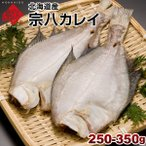 宗八カレイ 特大 生干し昆布干物シリーズ ギフト プレゼント用 北海道  内祝 お歳暮