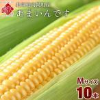北海道産 とうもろこし あまいんです M(360g前後) 10本(3.6kg前後) とにかく甘い!【送料無料】【産地直送】