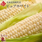 北海道 南幌町産 とうもろこし ピュアホワイト Lサイズ(380gアップ)8本 生で食べても甘い!【送料無料】【産地直送】