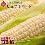 北海道 南幌町産 とうもろこし ピュアホワイト Lサイズ(380gアップ)16本(6.0kg以上) 生で食べても甘い!【送料無料】【産地直送】