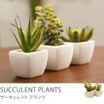 観葉植物 インテリア フェイク フェイクグリーン おしゃれ リアル 光触媒観葉植物 サーキュレントプランツ3点セット