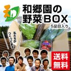 ショッピングBOX 和郷園 野菜ボックス5品目 野菜セット 野菜BOX 産地直送 農家厳選