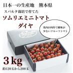 ギフト トマトケチャップ 送料無料 九州 熊本県玉名市産 ソムリエトマトを3倍濃縮 もぎたてを加工 小袋タイプ