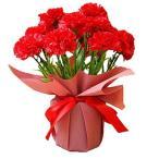 ソープフラワー カーネーション花鉢 誕生日 敬老の日 お祝い 鉢花 鉢植え プレゼント ギフト カーネーション フレグランスフラワー 花 枯