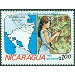 クーポン割 コーヒー豆 おすすめ 通販 ニカラグア リモンシリョ農園 ジャバニカ 中煎り(ハイロースト) 250g