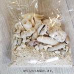 インテリアや工作にオススメ!珊瑚砂(貝殻入り)