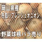 冬取りフレッシュオニオン 栽培用 裸球 1球 岡山県産野菜球根バラ売り