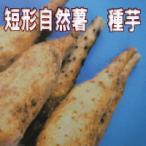 短形自然薯 種いも 2本 春植え野菜球根 国産