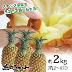 送料無料 沖縄県産 スナックパイン 約2kg 約2〜4玉 沖縄 パイナップル ボゴールパイン お中元 御中元 母の日 ギフト